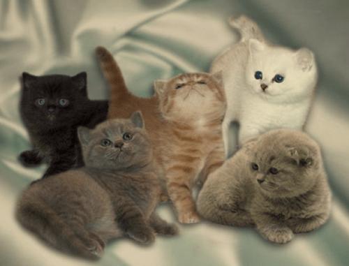 какое имя дать кошке