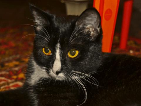 клички для черных кошек