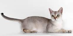 10 самых редких кошек