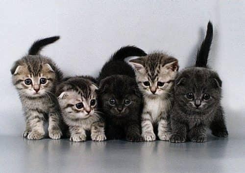 сколько живут домашние кошки