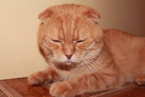 какие имена бывают у кошеккакие имена бывают у кошек