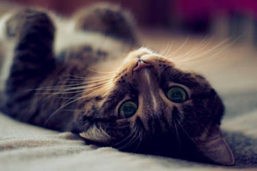 почему кошка не ест