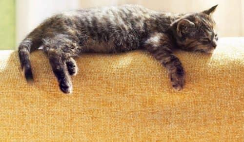 кошка после операции стерилизации