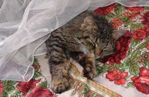 сколько стоит стерилизовать кошку