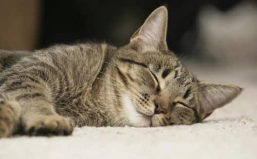 сколько в день спят кошки