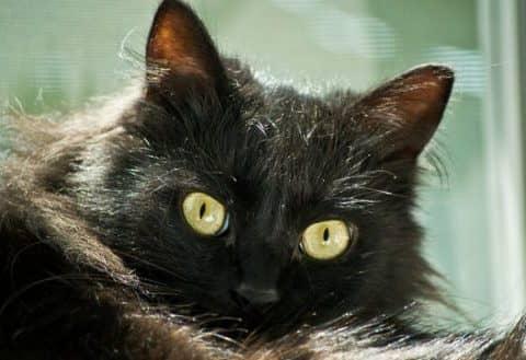 сколько в мире кошек