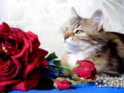 состав сухого корма для кошек