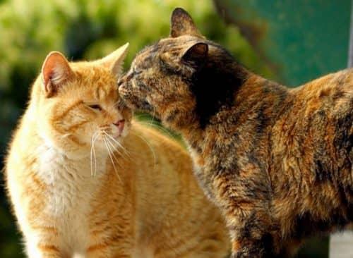 В каком возрасте можно вязать кота