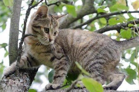 лечение блох у кошек