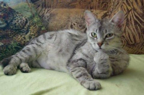 лечение диареи у кошек
