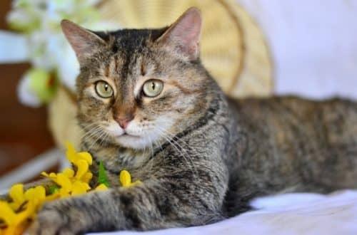 лечение глаз у кошек