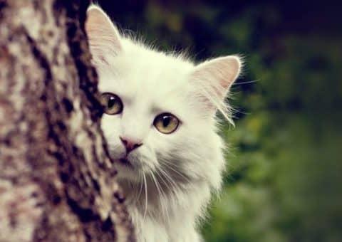 признаки аллергии у кошек