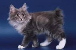 виды пород кошек
