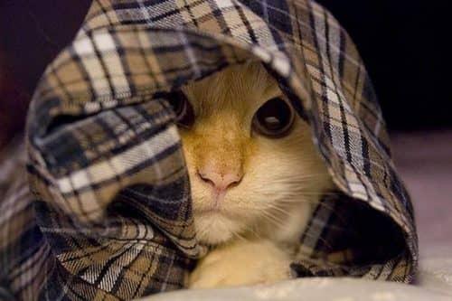 почему кошка прячется