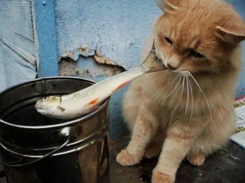 рыба для корма кошек