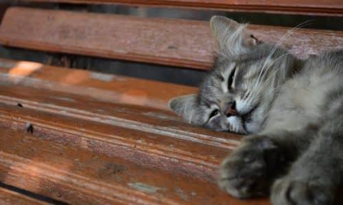 сказка про кошку
