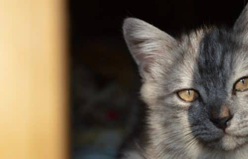 Если приснились коты что это значит у
