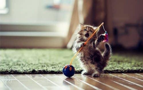 Коробка игрушка для кошки своими руками