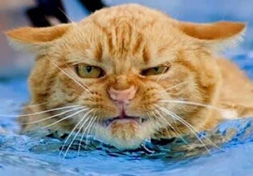 надо ли мыть кошек
