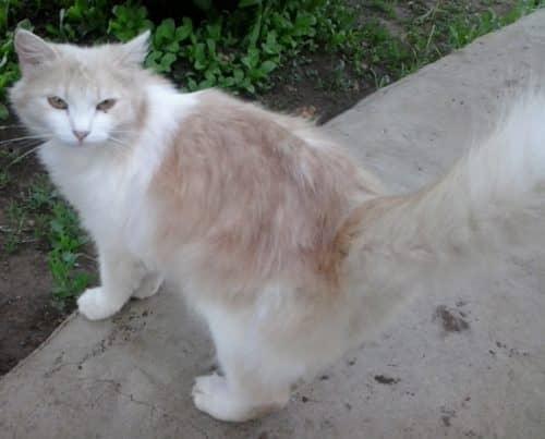 для чего кошке хвост