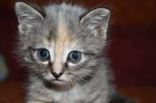 какие прививки надо делать котенку
