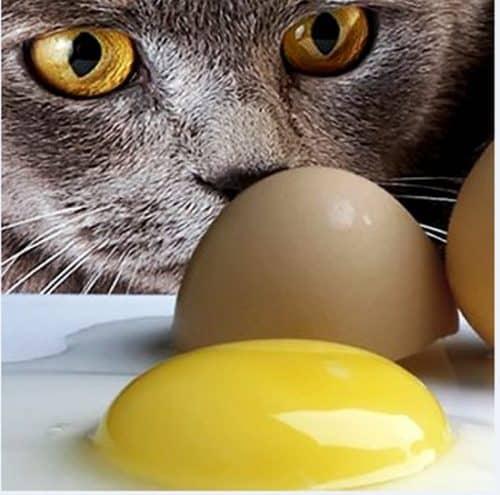 чем категорически нельзя кормить британских котят