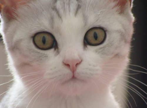 основы ухода за месячным котенком