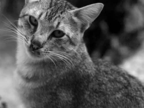 знаменитые кошки