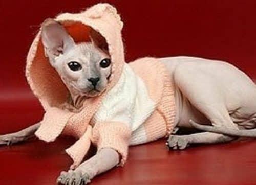 как сделать одежду для кошки своими руками котята от кошки и кота