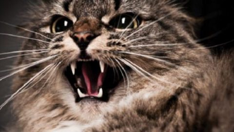 Болезни домашних кошек