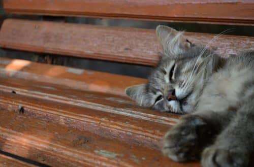 Как самому сделать прививки котятам