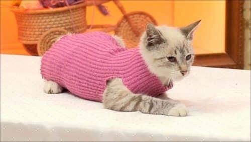 Сшить одежду кошке 17